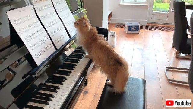 pianistcats4_640