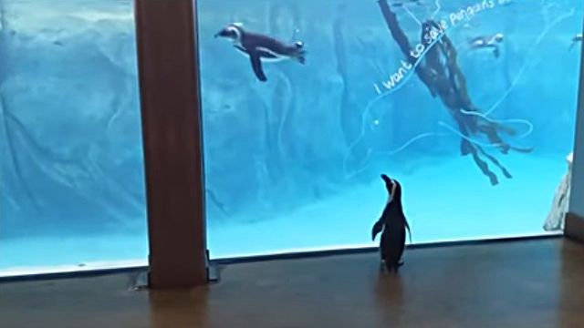 penguinwatch2