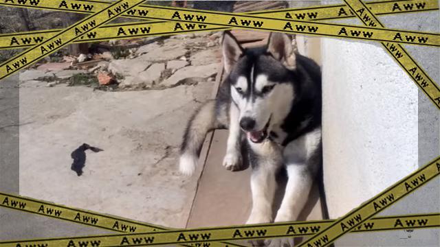 husky [www-frame
