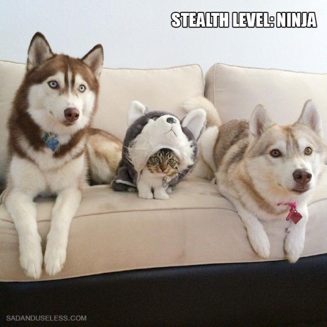 ninja-cat3_e
