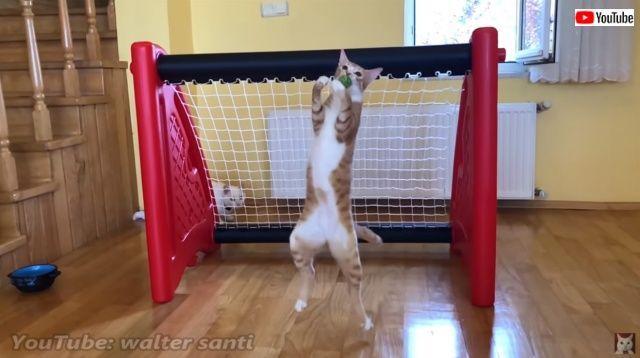 goalkeepercat3_batch
