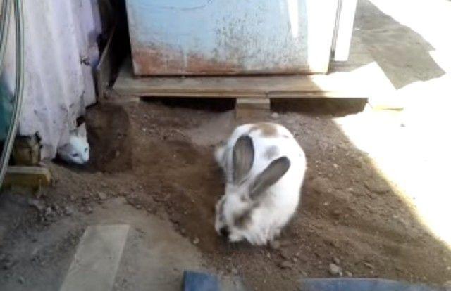 digging4_e