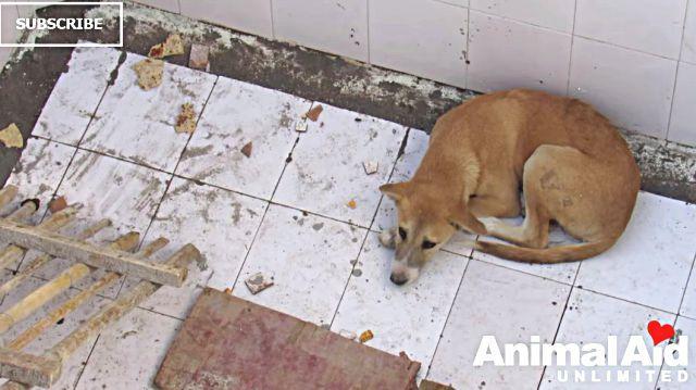animalaid10