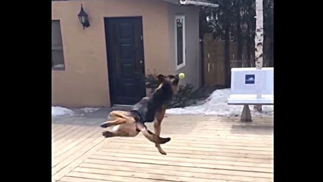 dogfailer9