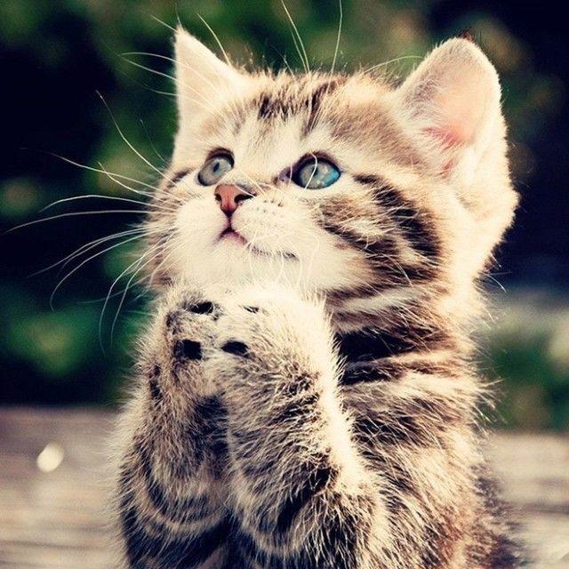 prayingcat18_e