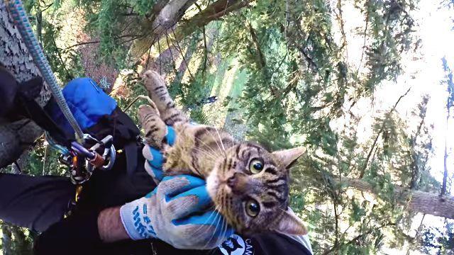 rescuingcats9