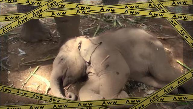 elephant 2-frame