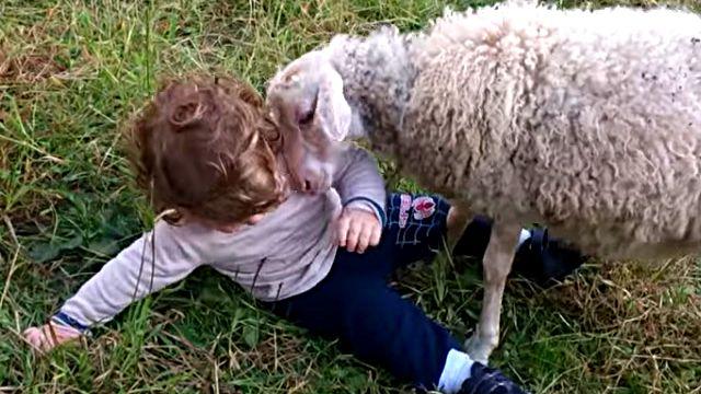 sheepnboy1