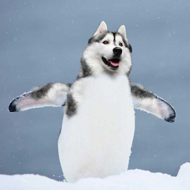 penguin3_e