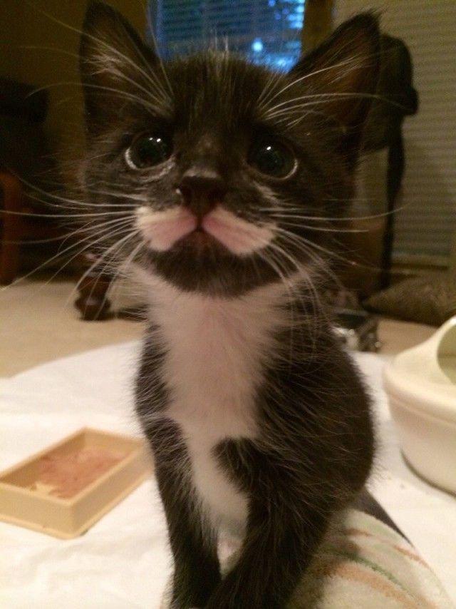 mustaches2_e