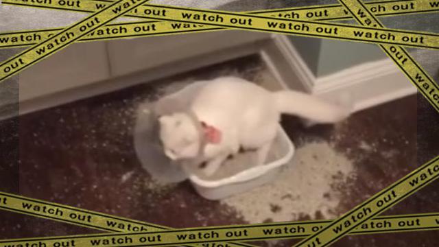 cat1 [www-frame