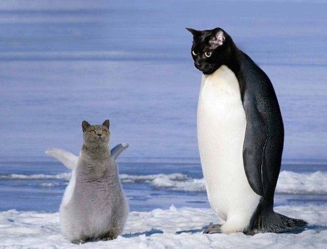 penguin15_e