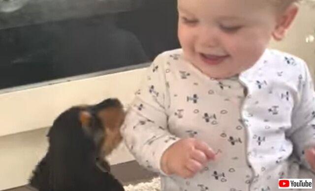 赤ちゃんと子犬の「はじめまして!」究極の和みしかない動画に癒されよう