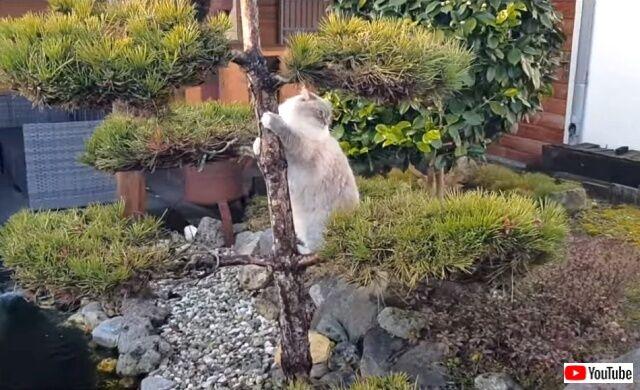 catsingarden2_640