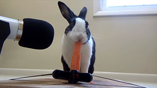 rabbitncarrot2