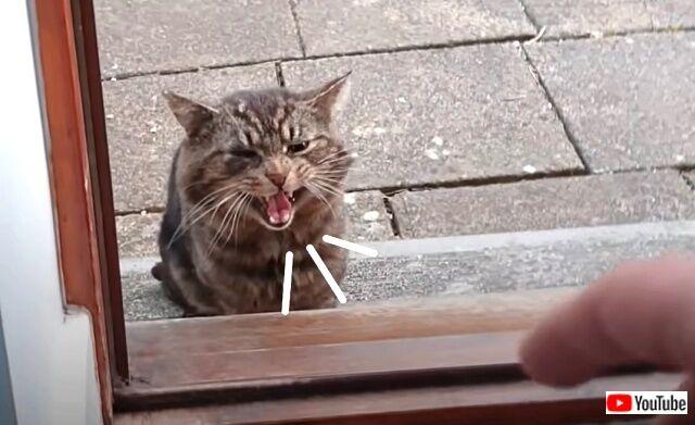 straycat4_640