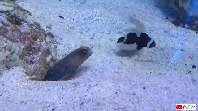 tropicalfishspittingsand0_640