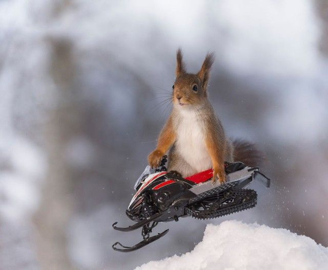 wintersportssquirrel5_e