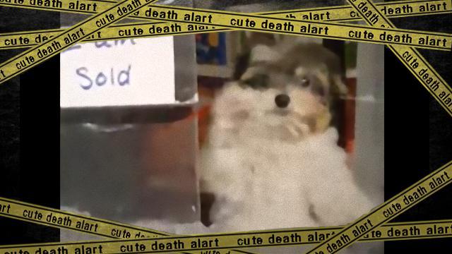 dog-f_e-frame