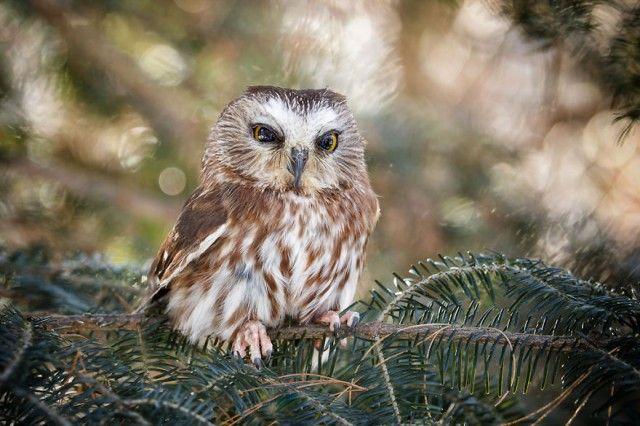 owl-photography-cute-104__880_e