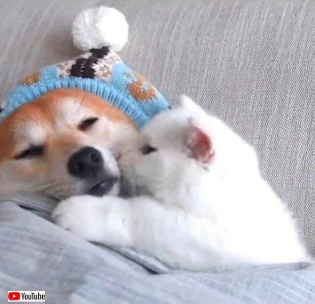 doggonkitty2_640