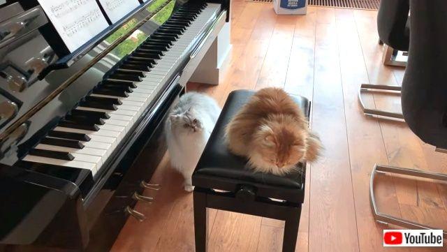 pianistcats5_640