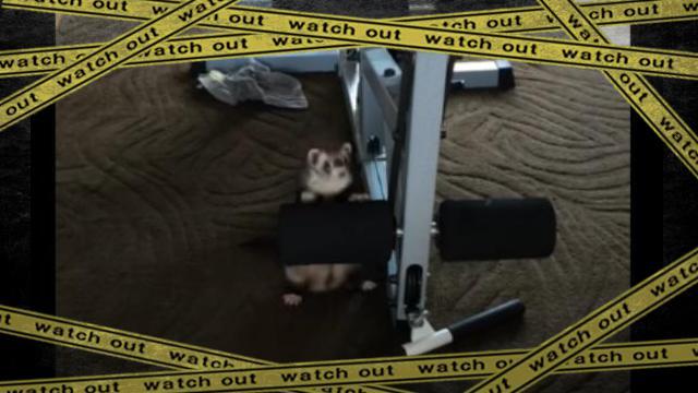 ferret-f [www-frame