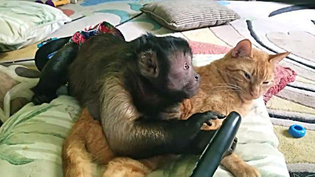 catnmonkeyTV2