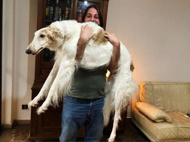 doglifter2_e