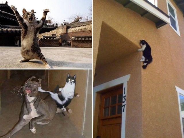 ninja-cat6_e