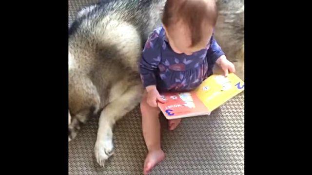 babydog2