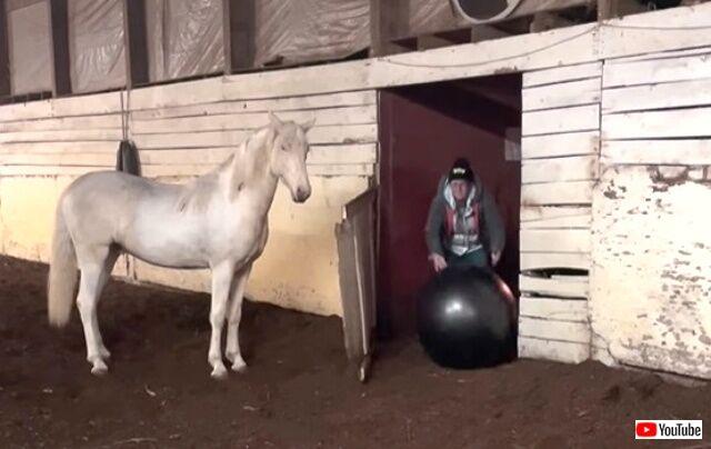 horsenball1_640