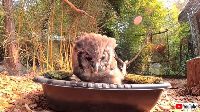 owl2_640