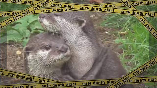 otter-f [www-frame