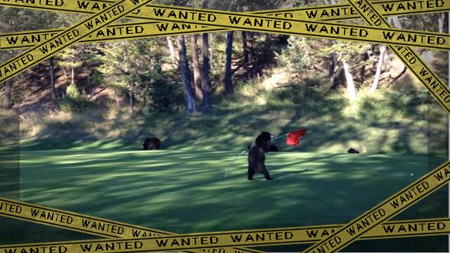 bear2 [www-frame