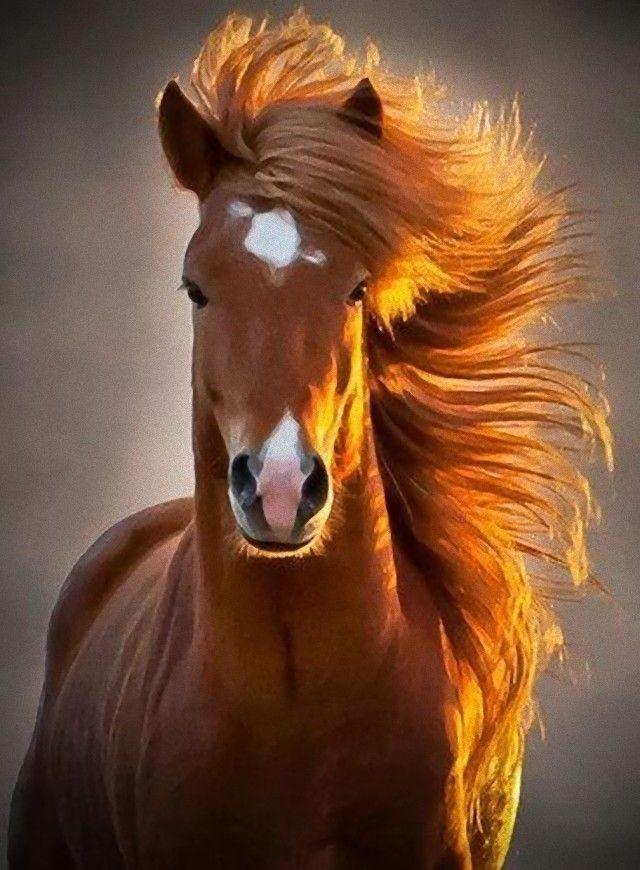 horse2_e