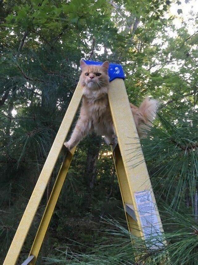 cat (6)_e