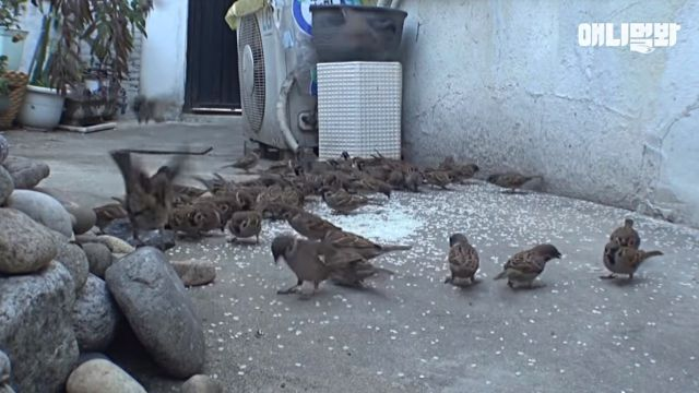 sparrows4
