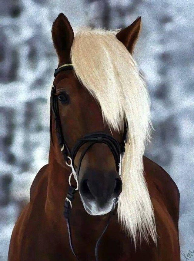 horse11_e