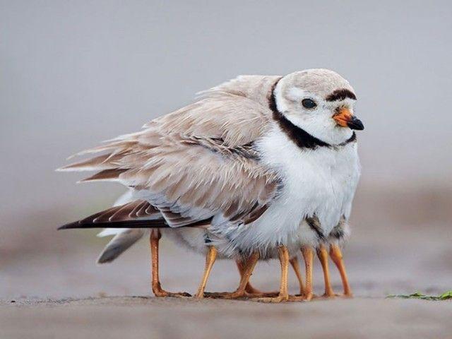 birdnbaby2_e