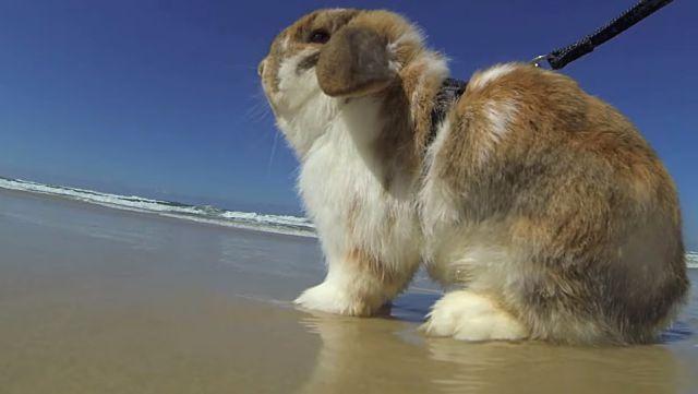 rabbitnbeach4