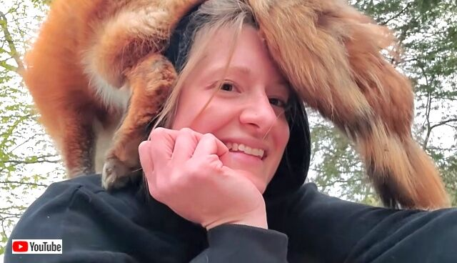 foxessayhehehe0_640