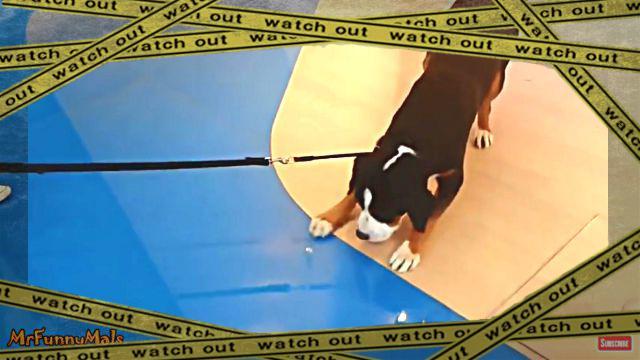 floordog0-frame