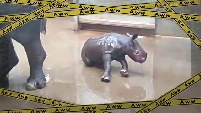 rhino-frame