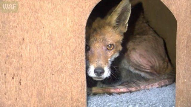 foxinbathroom6_e