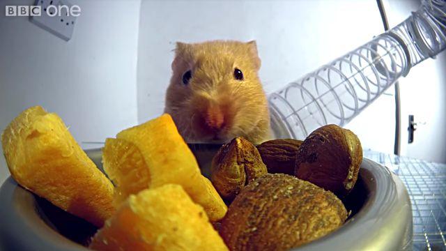 hamsterscheeks1
