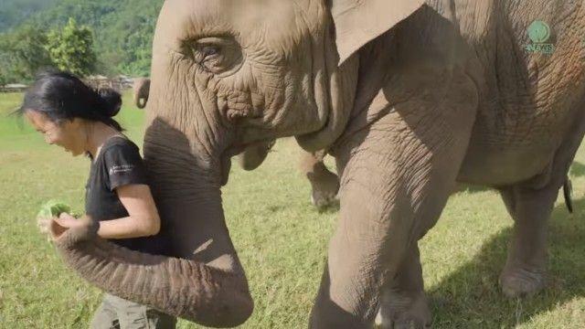 elephantsnbicycle4_e