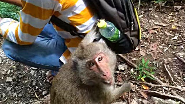 monkeywantswater3