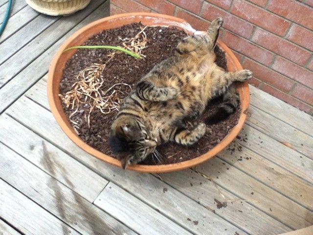 cat-plant18_e
