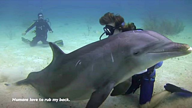 dolphinshark3